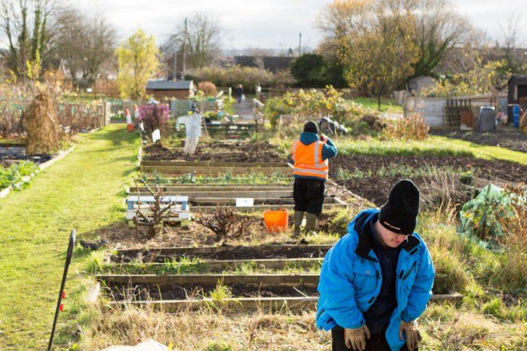 Gardening an a local allotment